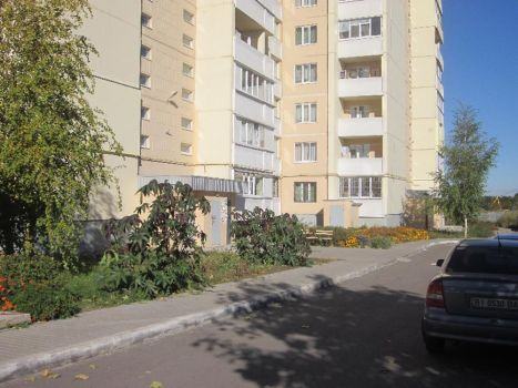 b_500_350_16777215_00_images_stories_borovikovskogo32.jpg